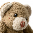 Portrait of Teddy Bear. - Stock Photo