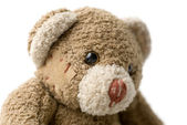 Portrait of Teddy Bear. — Stock Photo
