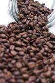 Coffee seeds — Stock Photo
