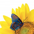 Sunflower with blue butterfly — Stock Photo #1846429