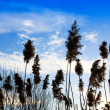 Grass and blue sky — Foto Stock