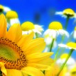 Stock Photo: Flower backgrounds