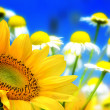 Flower backgrounds - Stock Photo