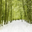 Winter forest — Stock Photo #1885703