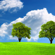 Two green oak tree on green field — Stock Photo