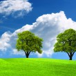 Two green oak tree on green field — Stock Photo #1886101