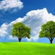 Two green oak tree on green field — Stock Photo