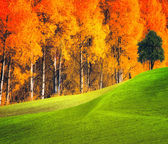 Autumn landscape — Stockfoto