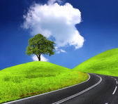 Road and green tree — Stock Photo