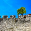 Old wall and green tree on a blue sky — Stock Photo