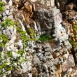 Green branches on the rocks - Stock Photo