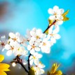 Beautiful spring flower — Stock Photo