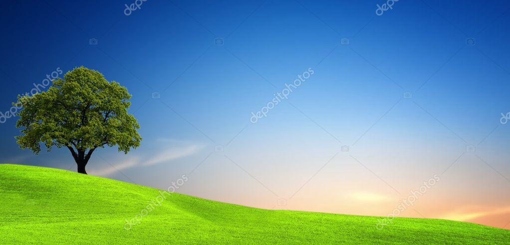 Фотообои Tree in green field