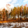 Winter forest — Stock Photo #2290726