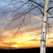 Branch tree on sunset sky — Foto de Stock