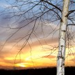 Branch tree on sunset sky — Stok fotoğraf