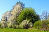 Springtime park — Stock Photo