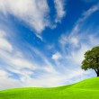 Green tree on blue sky — Stock Photo #2495584