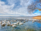 Swan lake on blue sky — Stock Photo