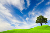 árvore verde no céu azul — Fotografia Stock