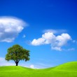 Ecology and Environment — Stock Photo