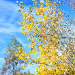 Foto Stock: Autumn Tree