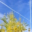 Tree on blue sky - Stockfoto