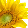 Isolated yellow sunflower — Stock Photo #2529814