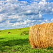 Stock Photo: Field of hay bales