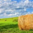 Field of hay bales — Stock Photo