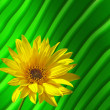 Yellow sunflower — Stock Photo #2600897