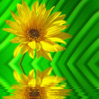 Yellow flower reflection - Stock Photo