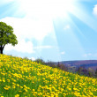 Oak tree on dandelion field — Stock Photo