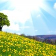 Stock Photo: Oak tree on dandelion field