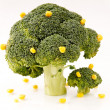 Broccoli trees — Stock Photo