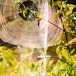 Royalty-Free Stock Photo: Spiders web