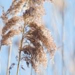 Wild grass — Stock Photo #1905345