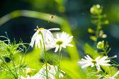 Wild flowers — ストック写真