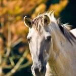 Horse — Stock Photo #1967818