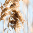 Stock Photo: Wild grass