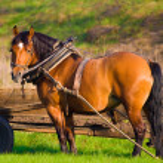 Horse — Stock Photo #2061529