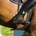 Horse — Stock Photo #2061650