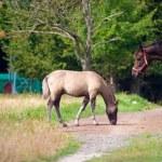 Horse — Stock Photo #2061705