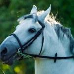 Horse — Stock Photo #2061755