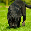 Dog named Force — Stockfoto