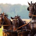 Horse — Stock Photo #2272138