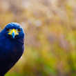 Bird — Stock Photo #2272450