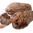 Brain — Stock Photo #1848837