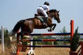 Pferd springen — Stockfoto