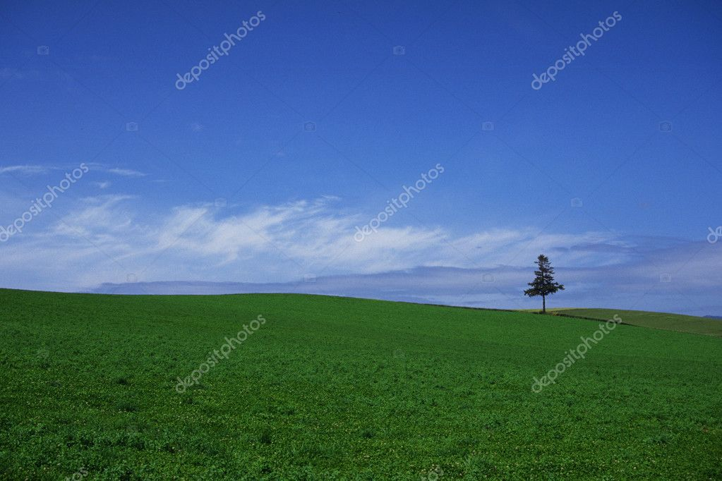 Natural landscape — Stock Photo #1911625